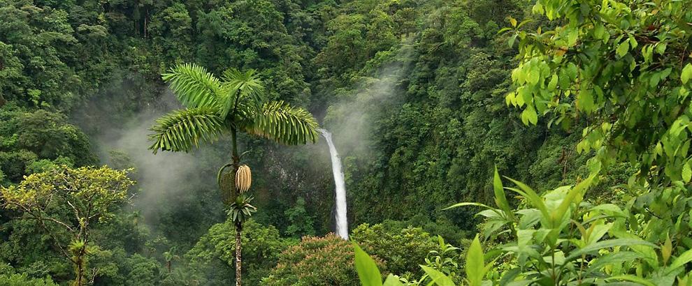 La caduta del cielo - foresta amazzonica