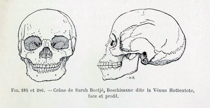 Cranio di Saartjie Baartman in Quatrefages, 1887, 383